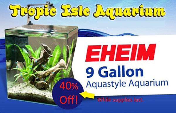 Tropic Isle Aquarium | Monthly Specials