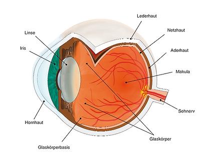 Vista Alpina Augenzentrum ¦ Visp, Siders, Wallis ¦ Anatomie des Auges