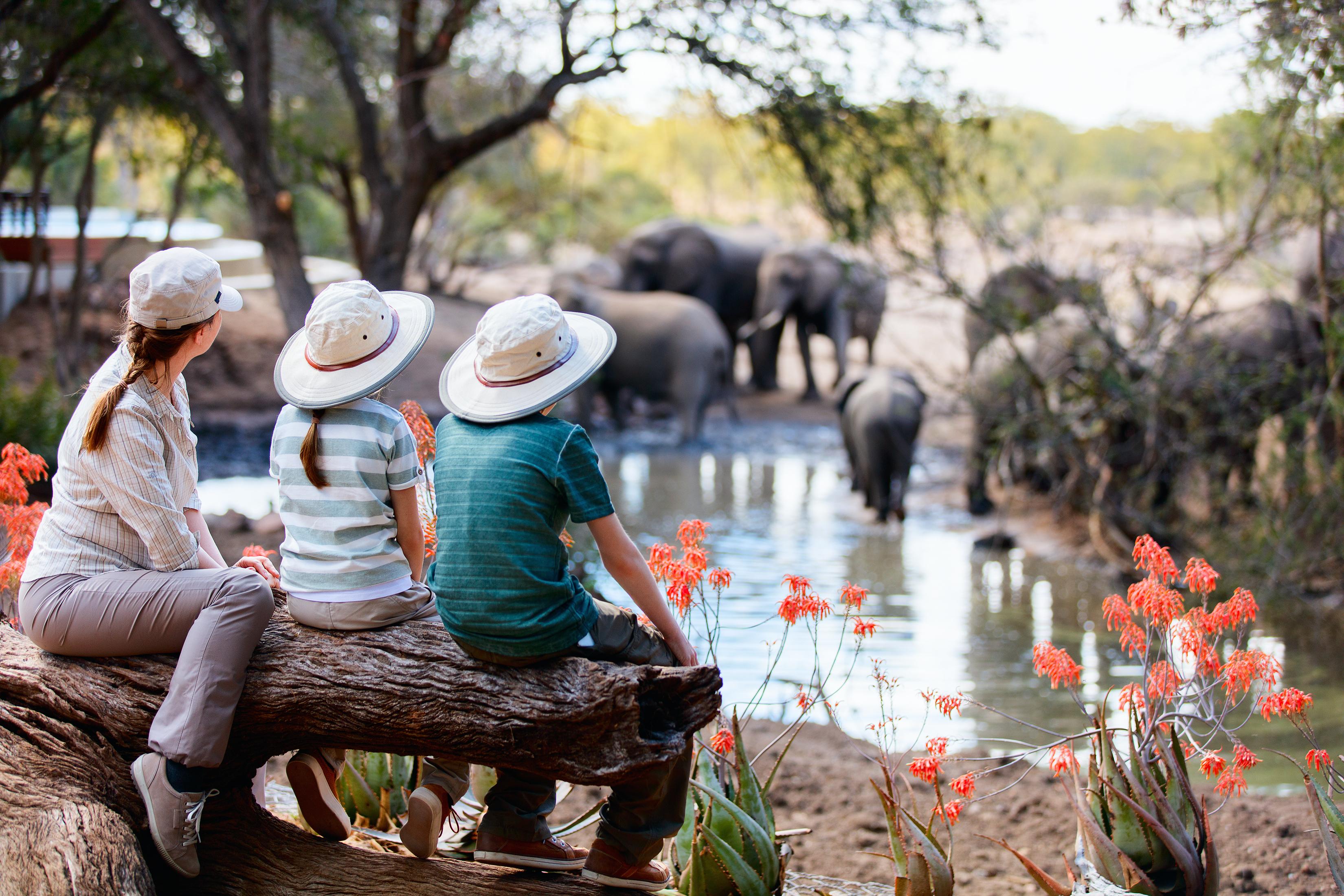 safari, olifant, afrika, tanzania