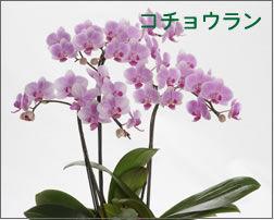 花屋さんって、予算が1000円でも、花束って作って …