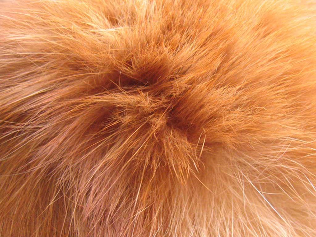 Peach's Hair