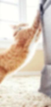 Kattengedragstherapie, kat krabt aan de zetel