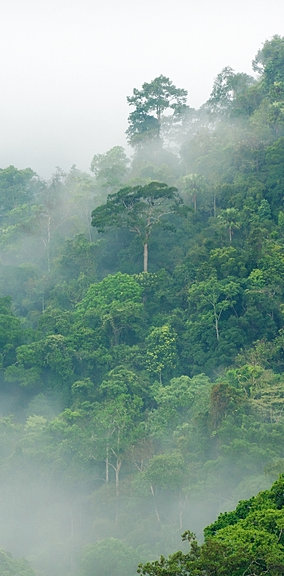 What are rainforests? - A definitive guide.