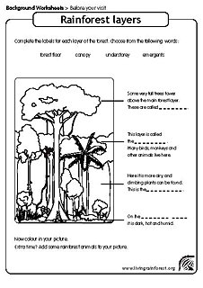 Worksheets Layers Of The Rainforest Worksheet free rainforest worksheets for teaching and learning about rainforests worksheet kids layers of the worksheet