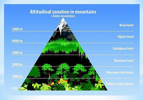 Mountain diagrams