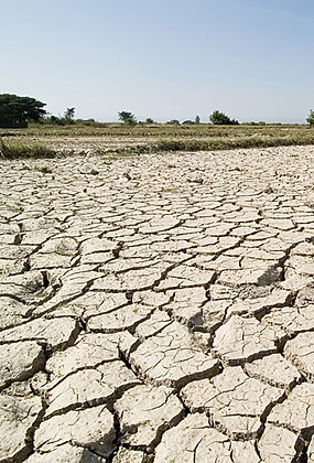 Environmental Impacts of Drought