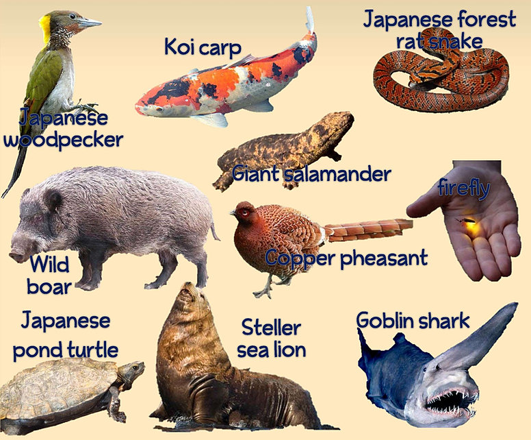 Japan animals