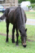 coal sc-cares rescue horse