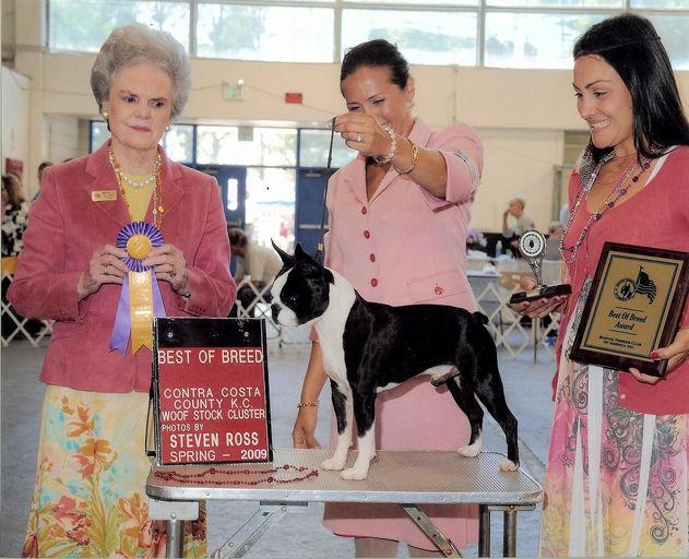 Professional Handler Fees Dog Shows