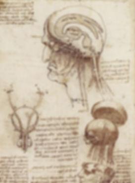 brainphysiology.jpg