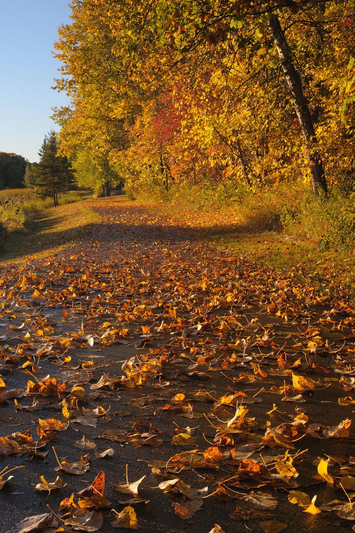 Fall Landscape Photograph
