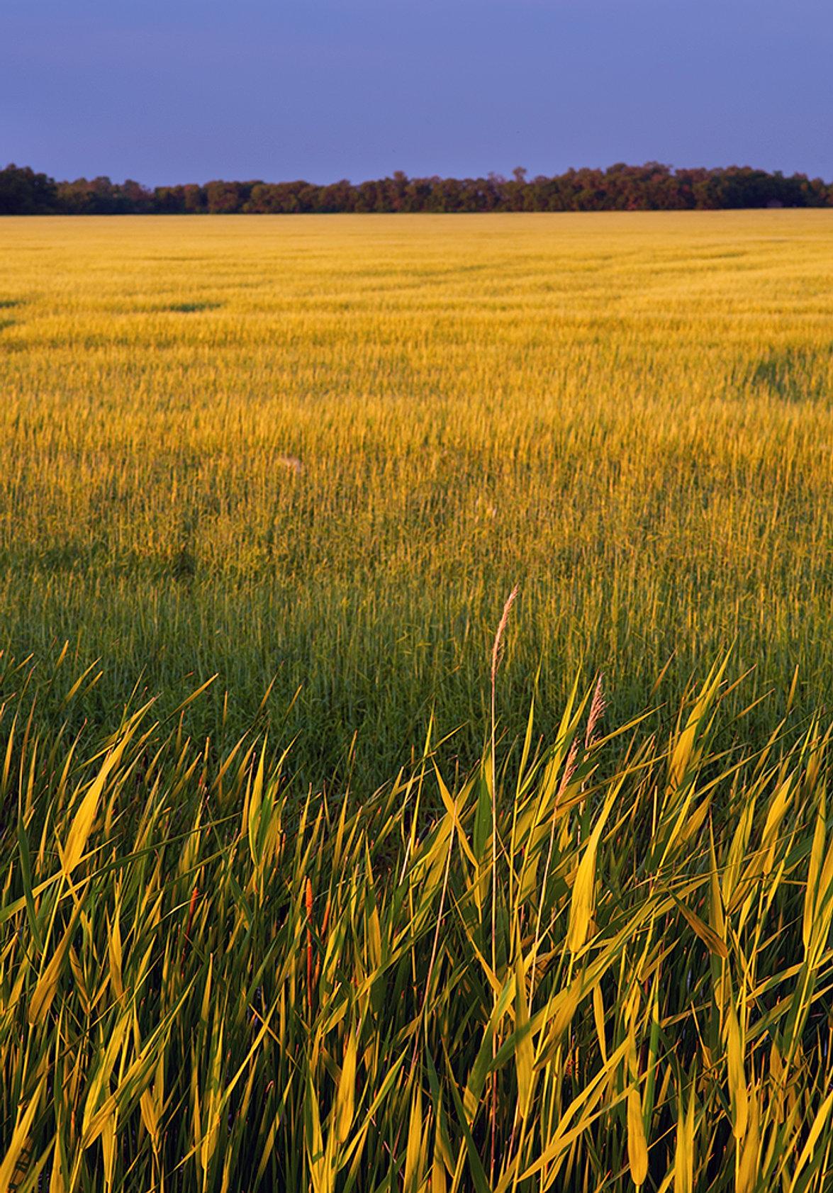 Landscape Photograph of Agriculture
