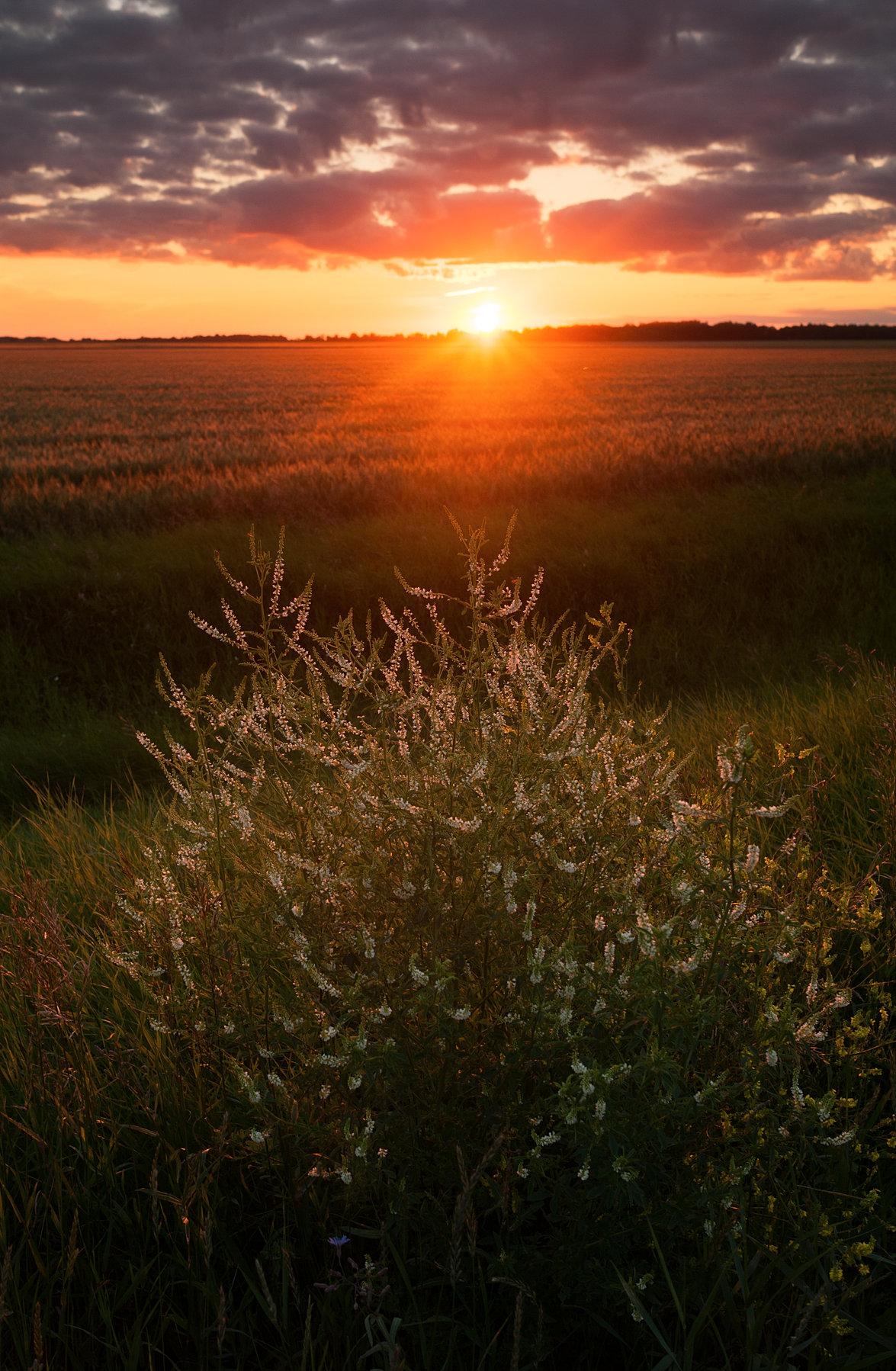 Sunset Photograph Manitoba