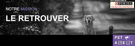 Pet Alert Gironde 33 5d52e0_c2516aacf775451d9ed7bfda9f4138c5.jpg_srz_p_433_149_75_22_0.50_1.20_0