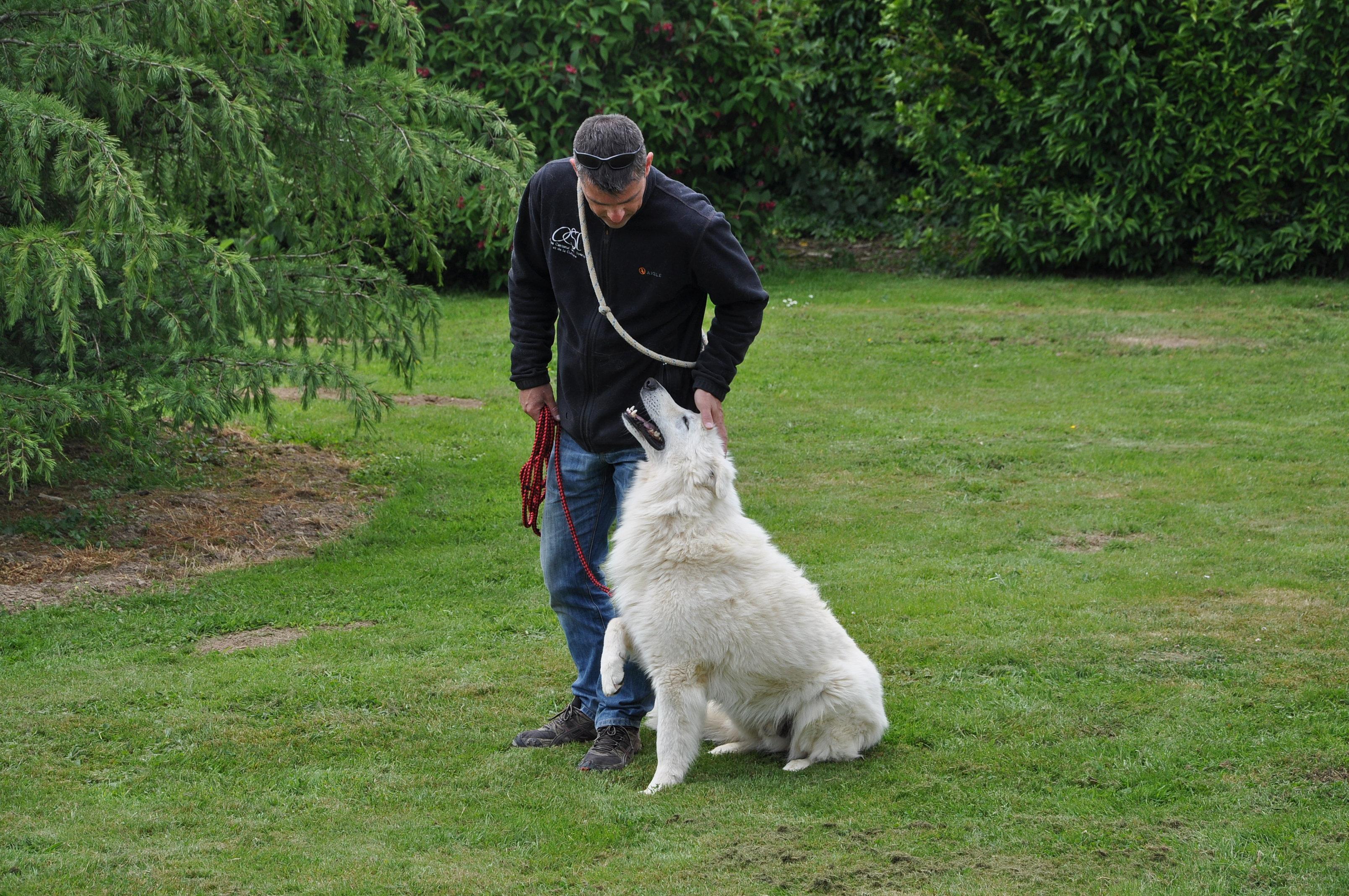 éducateur canin manche 50 | DSC_0912