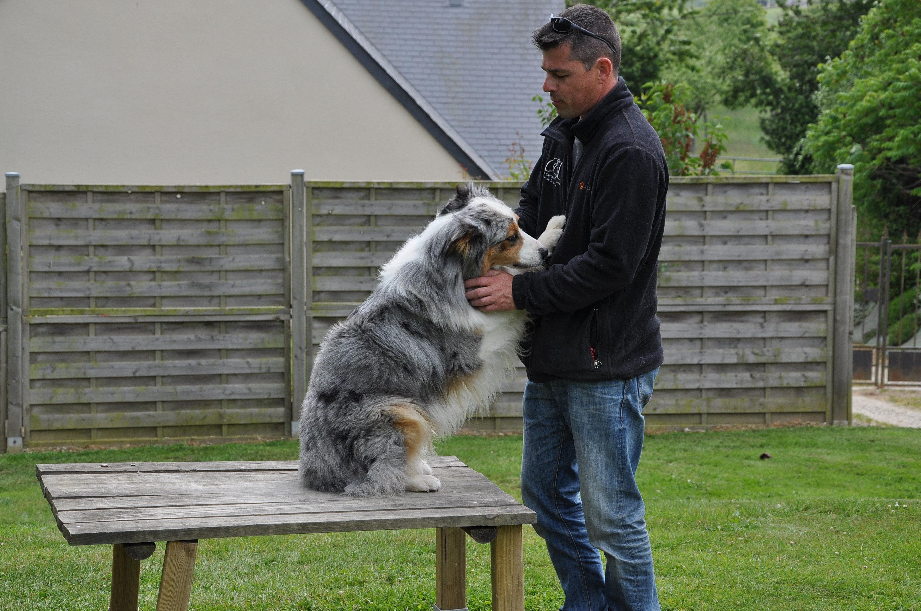 éducateur canin manche 50 | DSC_0924