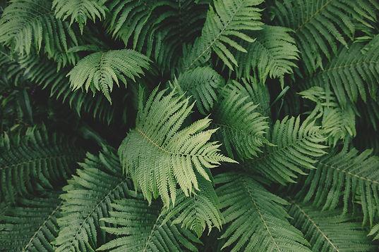 ferns in planting design