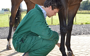 How many years will it take to become an equine vet?