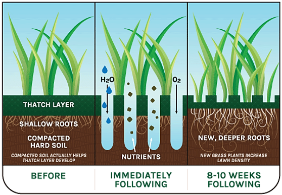 effect of soil compaction on root