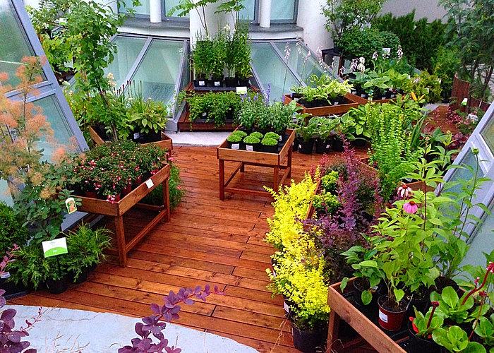 2015 ботанический сад мгу