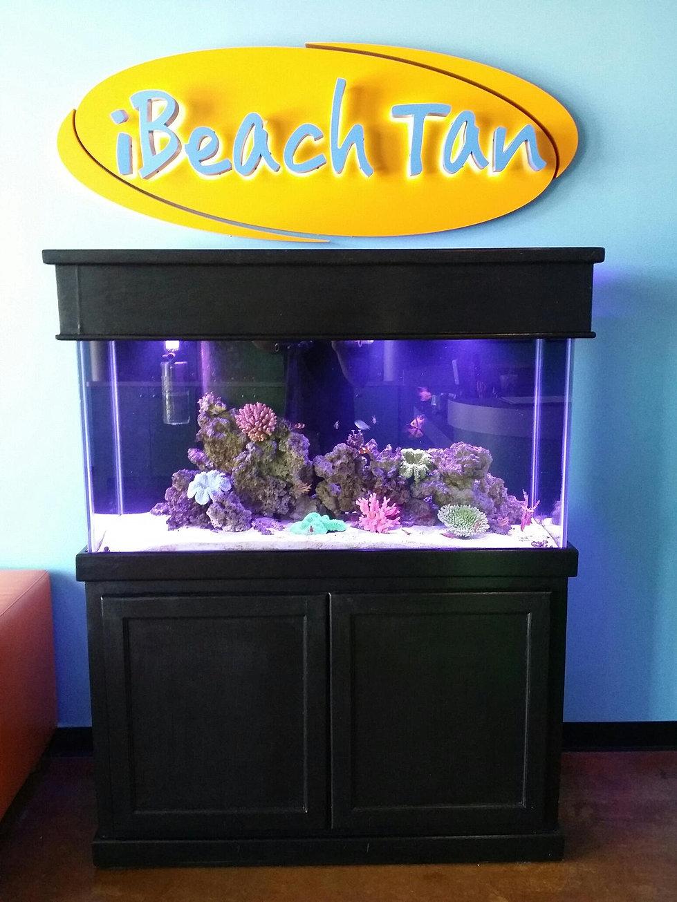 Freshwater aquarium fish dallas - Oceanic Life Aquariums Leasing