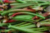 Rhubarbe_Fotor.jpg