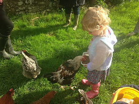 feeding hen 4mb.JPG