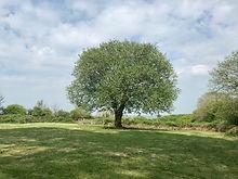 tree in top field 4mb.jpg