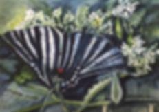 Ammon-Butterfly-2019web.jpg