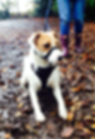 The Surrey Ark, Claygate, Effingham, Esher, Thames Ditton, Dog Walker, House Sitter, Pet Care, Dog sitting, dog walking, Long Ditton, East Horsley,