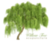 willow tree acupuncture1.jpg