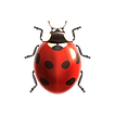 1410.i040.045.S.m005.c11.insect_8.png