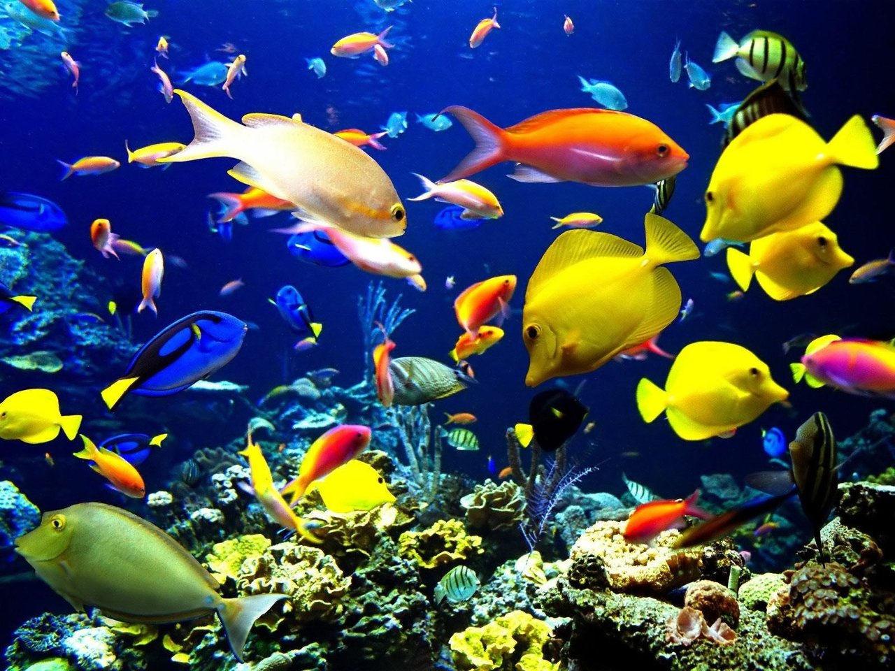 Coral Reefs   Wix.com