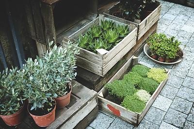 Plantas en Venta