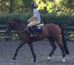 IMG_5276dressage.PNG