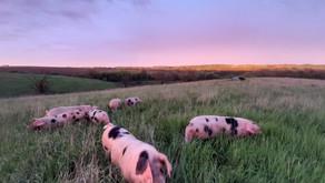 WFU成员赞扬农业投资