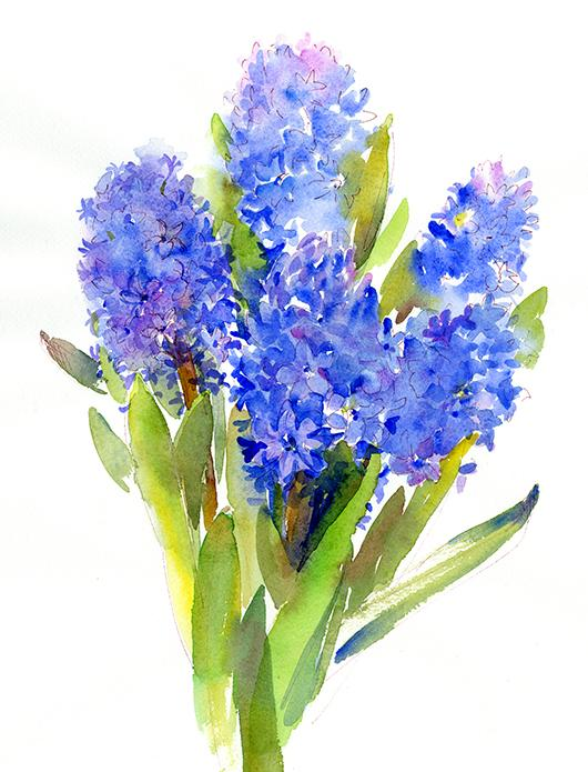 Blue hyacinth john keeling paintings watercolor oil painting