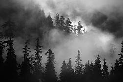 forêt transparente