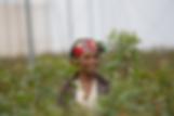 Bellaflor Ethiopia