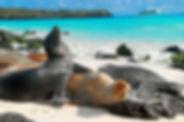 animales-islas-galapagos.jpg