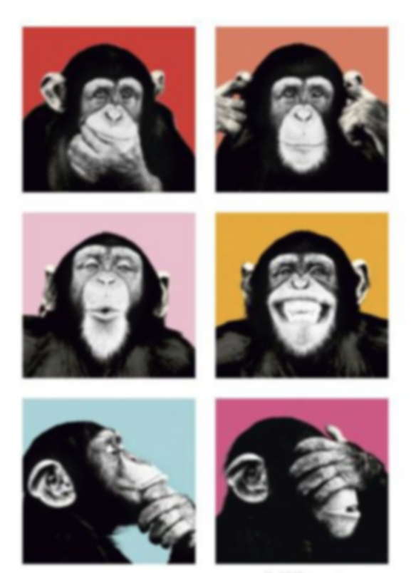 CHIMP WARHOL.png