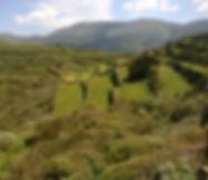 φυσική βιοδυναμική βιολογική καλλιέργεια ελιά ρίγανη θυμάρι ελίχρυσος τσάι του βουνού Αμοργός