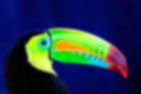 Pura Vida Connections Toucan