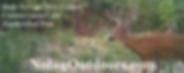 deer for window draft 4.png