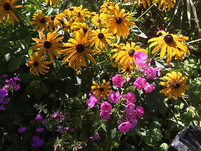 Scenic Gardensbylynncom  Minnetonka Mn  Garden Design  Flower  With Fetching Gardensbylynncom  Minnetonka Mn  Garden Design  Flower Containers   Contrasting Color Perennial Garden With Lovely Garden Fancy Dress Also Hardwood Garden Furniture Sale In Addition Garden Centre Bbq And Travel Lodge Convent Garden As Well As Olivia Garden Additionally Holiday Inn Near Covent Garden From Gardensbylynncom With   Fetching Gardensbylynncom  Minnetonka Mn  Garden Design  Flower  With Lovely Gardensbylynncom  Minnetonka Mn  Garden Design  Flower Containers   Contrasting Color Perennial Garden And Scenic Garden Fancy Dress Also Hardwood Garden Furniture Sale In Addition Garden Centre Bbq From Gardensbylynncom