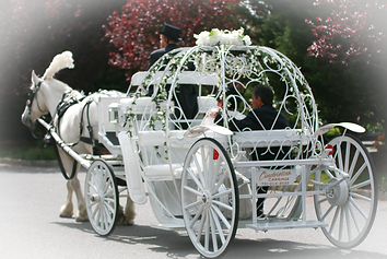 Wedding Carriages Dream Horse Carriage Company