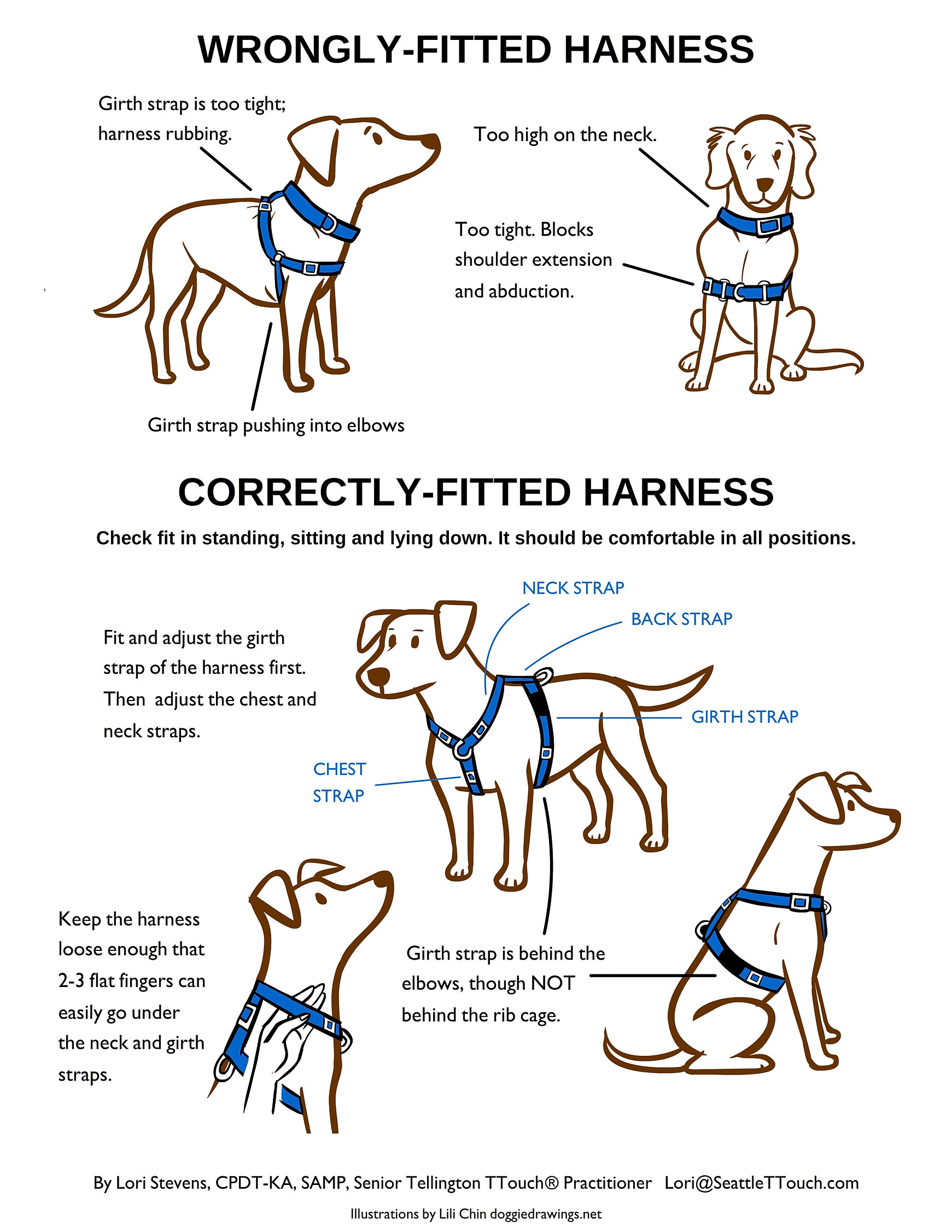 Dog S Best Friend How To Prevent Puppy Nipping With Compassion