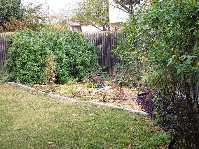 Back Yard November 2010
