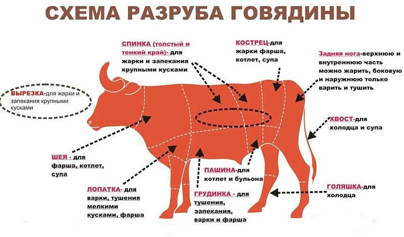 Схема разруба говядины.