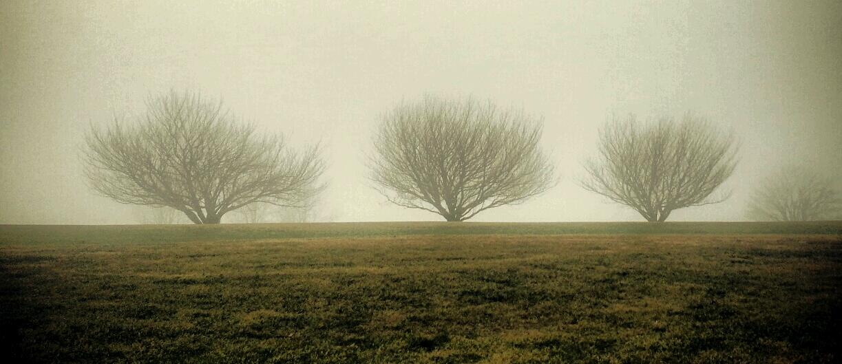 the three trees of woods hole